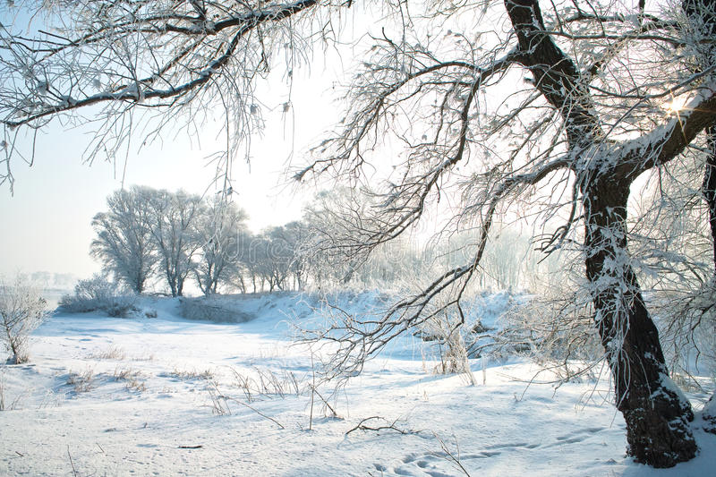 Download Trees covered with glaze stock photo. Image of white - 36220940