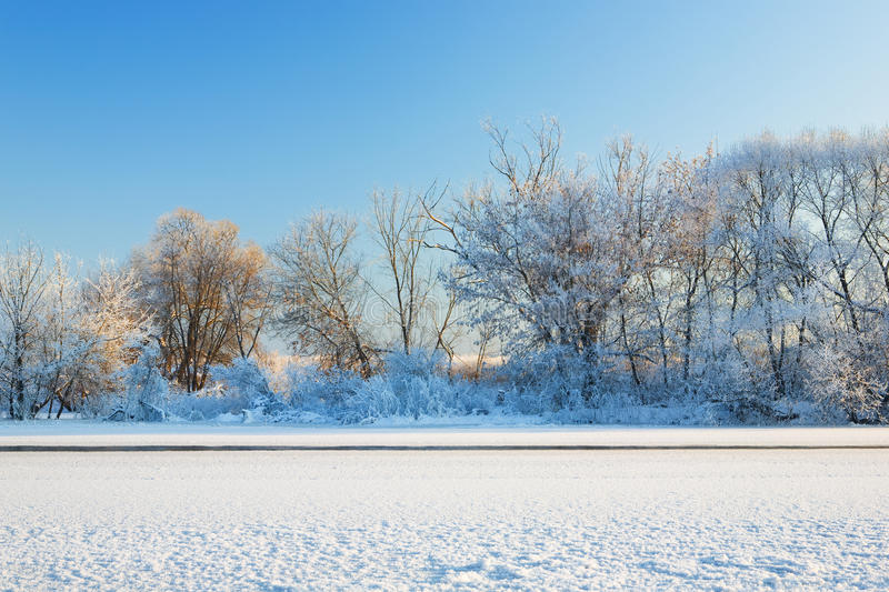 Download Trees covered by hoarfrost stock photo. Image of natural - 12495986