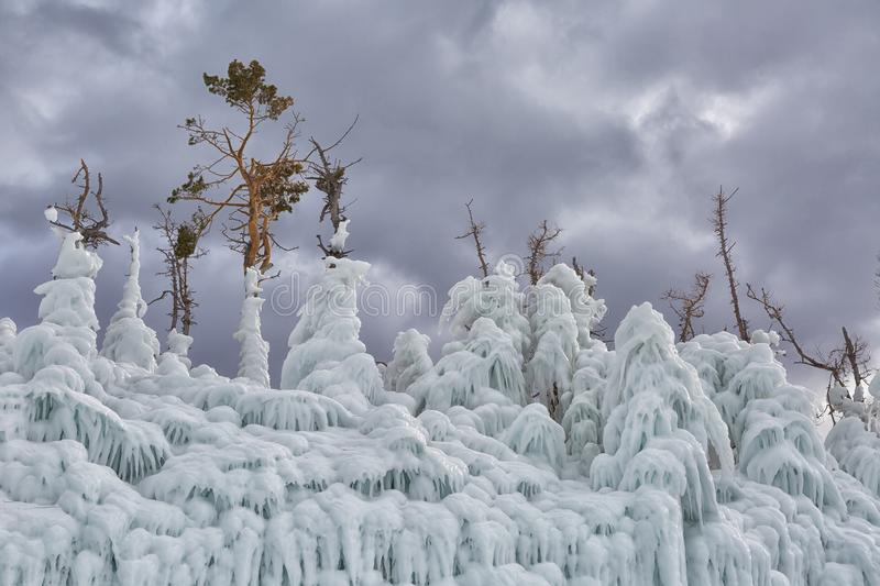 Trees covered with ice. Lake Baikal royalty free stock images