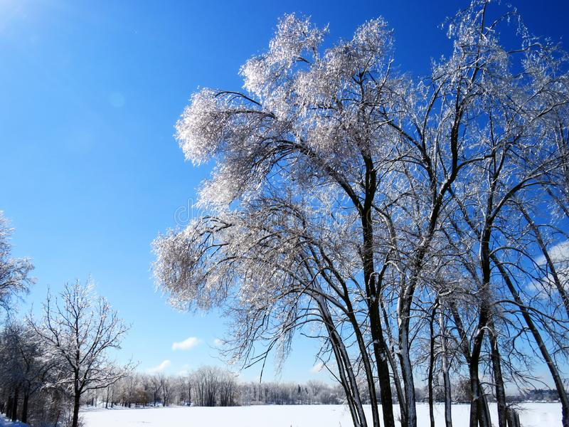 Trees covered of ice shining like diamonds stock photo
