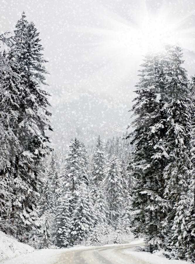 Trees covered with snow stock photos