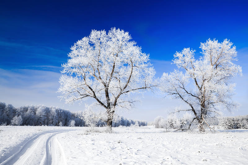 Download Trees Covered With Snow Against The  Sky Stock Image - Image of horizon, picturesque: 22988153