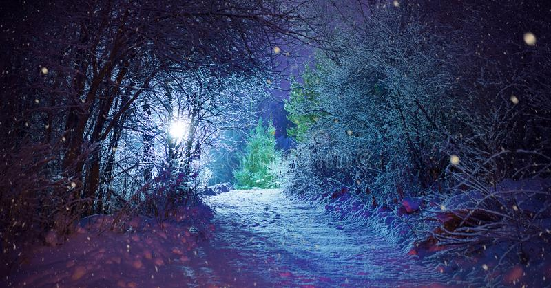 Trees covered with snow, dark sky and shining lantern through snowing. Park scene. Night shot. stock photos