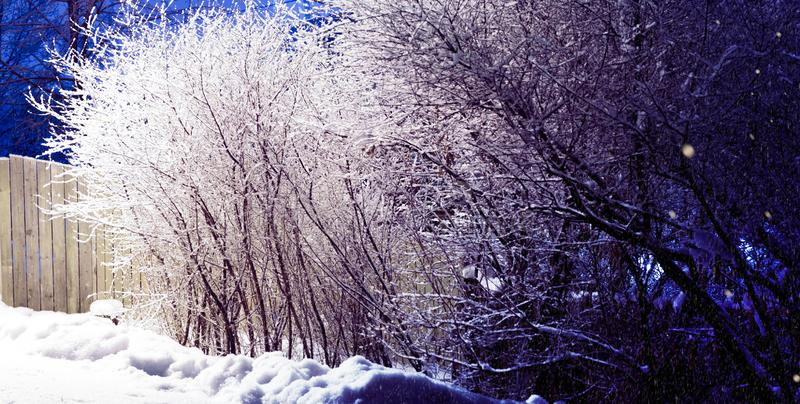 Trees covered with snow, dark sky and shining lantern on the snow-covered bushes. Park scene. Night shot. stock images