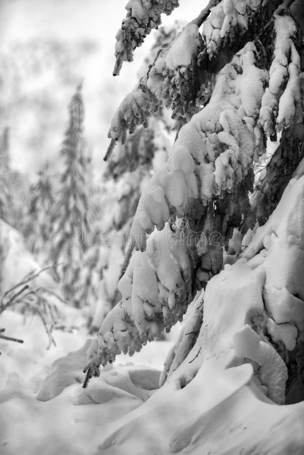 Trees covered with snow in the mountains, winter forest and mountain landscape stock photos