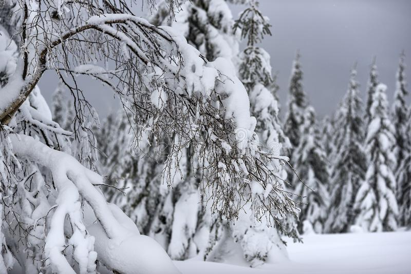 Trees covered with snow in the mountains, winter forest and mountain landscape stock photo