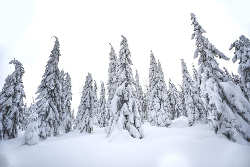 Trees covered with snow in the mountains, winter forest and mountain landscape stock image