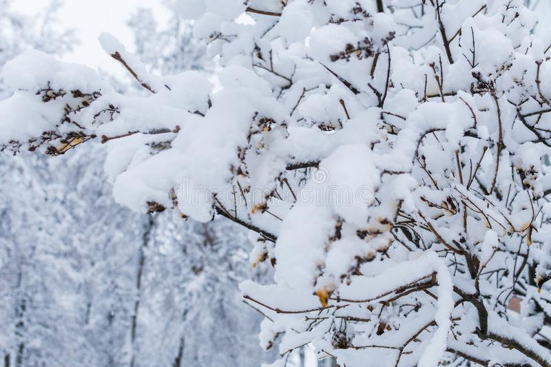 Trees covered with snow. snowy winter stock photography