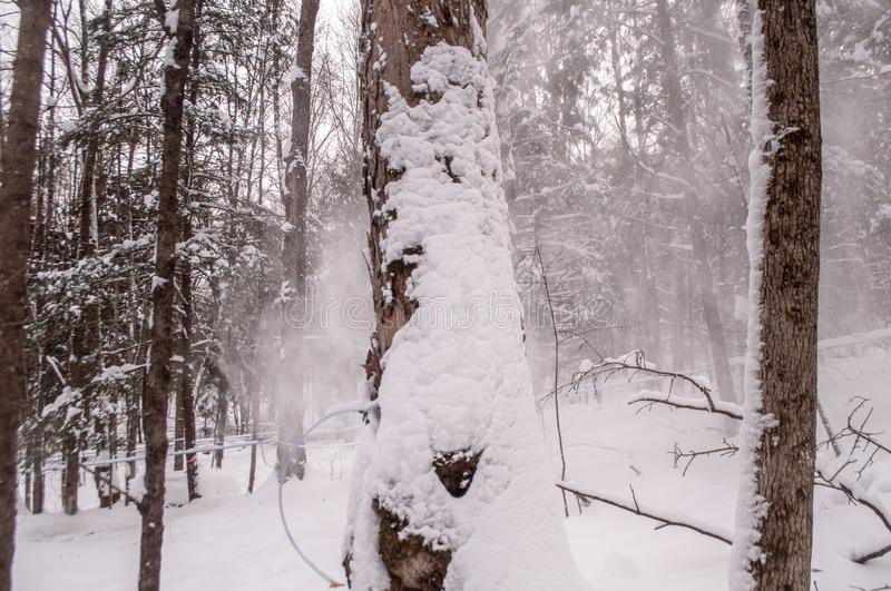 Trees Covered With Snows at Daytime stock photography