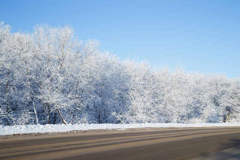 Trees covered with white snow at roadside. Winter landscape at the roadside, trees covered with snow and blue sky stock images