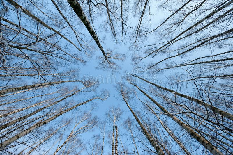 Download Trees crown stock photo. Image of outback, radial, silence - 8631390