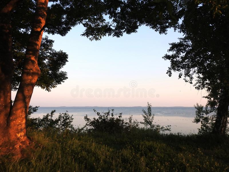 Trees and Curonian spit in early morning, Lithuania. Beautiful trees and curonian spit with swans in early morning royalty free stock photo