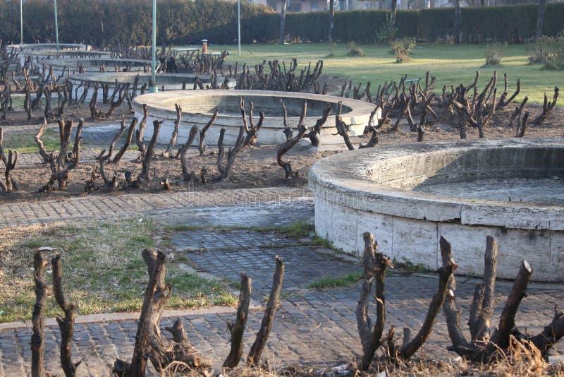 Trees cut
