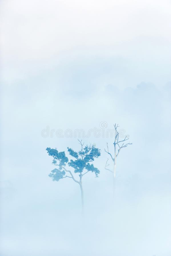 Trees dead and alive in the mist royalty free stock photos