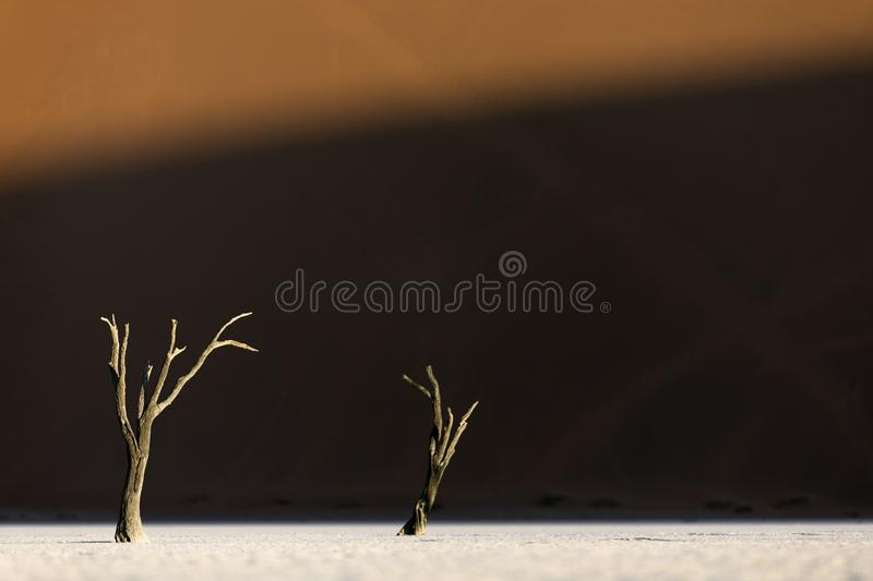 Trees in Deadvlei, Sesriem, Sossusvlei, Southern Namibia. nTwo trees. Sand dune in background. stock photo