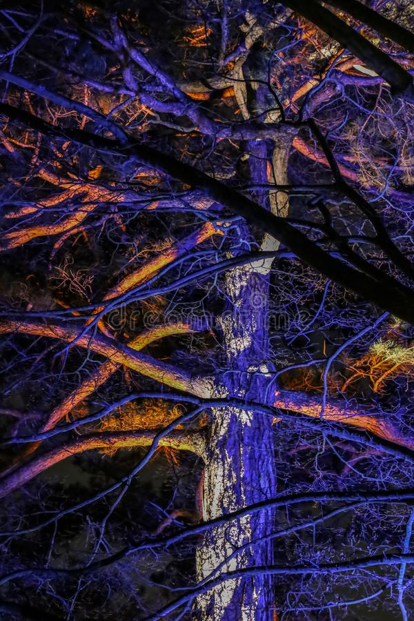 Trees Decorated With Lights In Kew Gardens London
