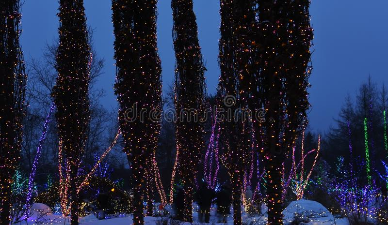 Trees decorated with luminous garlands in a city park. Winter night festive view of decorated trees. For the holidays of Christmas and New Year stock photos