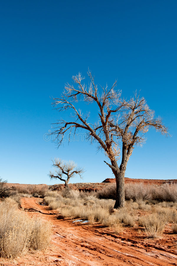 Download Trees in desert stock photo. Image of dirt, beautiful - 8712382