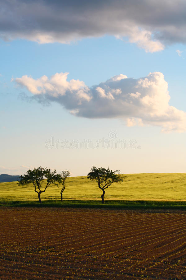 Trees in dramatic nature royalty free stock photo