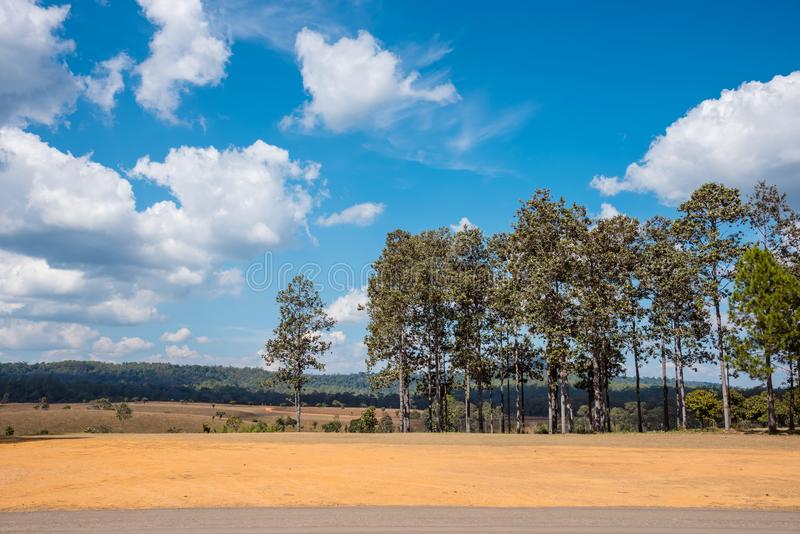 Trees with dry ground. And blue sky stock image