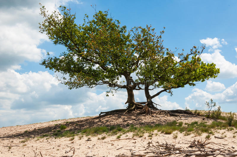 Trees on a dry and sandy hill