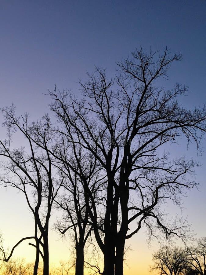 Trees at Dusk in Indiana royalty free stock photos