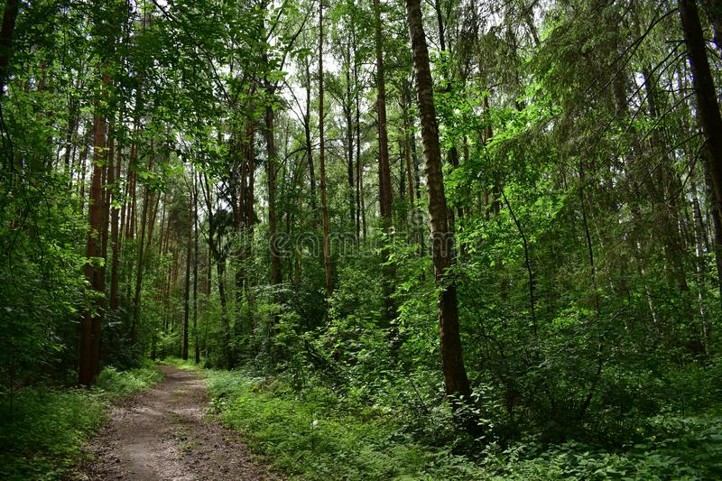 Trees and exotic plants grow on the territory of a quiet and shady Park. The forest is shady and fragrant royalty free stock photo
