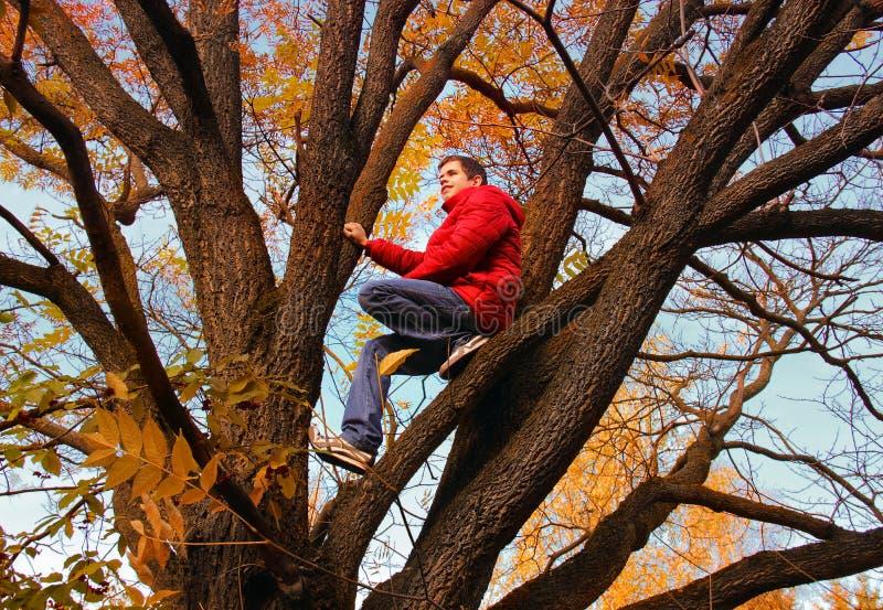 trees för äng för höstbjörkleaves orange
