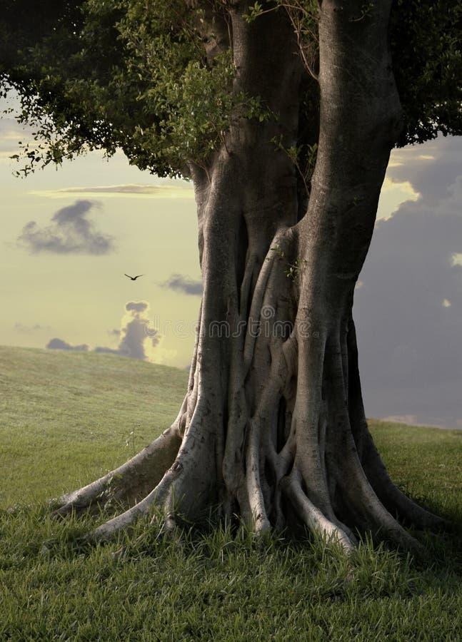 trees för ficus iii