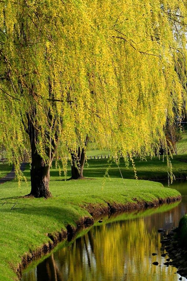trees för fjädertid royaltyfri bild