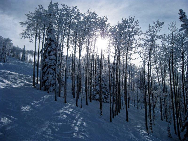 26 trees för format för sammansatt digital enorm mpix panorama- sköt snöig fotografering för bildbyråer