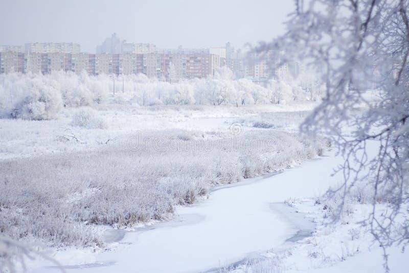 trees för park för den dagfrostjanuari naturen övervintrar snöig Buskar och träd täckas med den synliga isbundna floden för tjock fotografering för bildbyråer