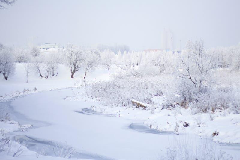 trees för park för den dagfrostjanuari naturen övervintrar snöig Buskar och träd täckas med den synliga isbundna floden för tjock royaltyfri bild