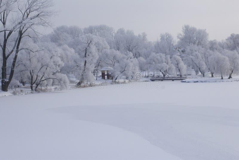 trees för park för den dagfrostjanuari naturen övervintrar snöig Buskar och träd täckas med den tjock frost sedda is-destinerade  royaltyfria foton
