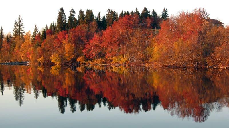 trees för reflexion för lakespegel röda arkivfoton