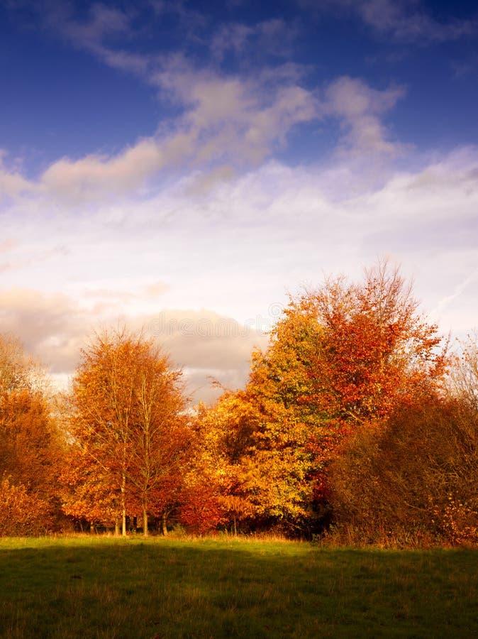 trees för solljus för aftonfall guld- arkivbild