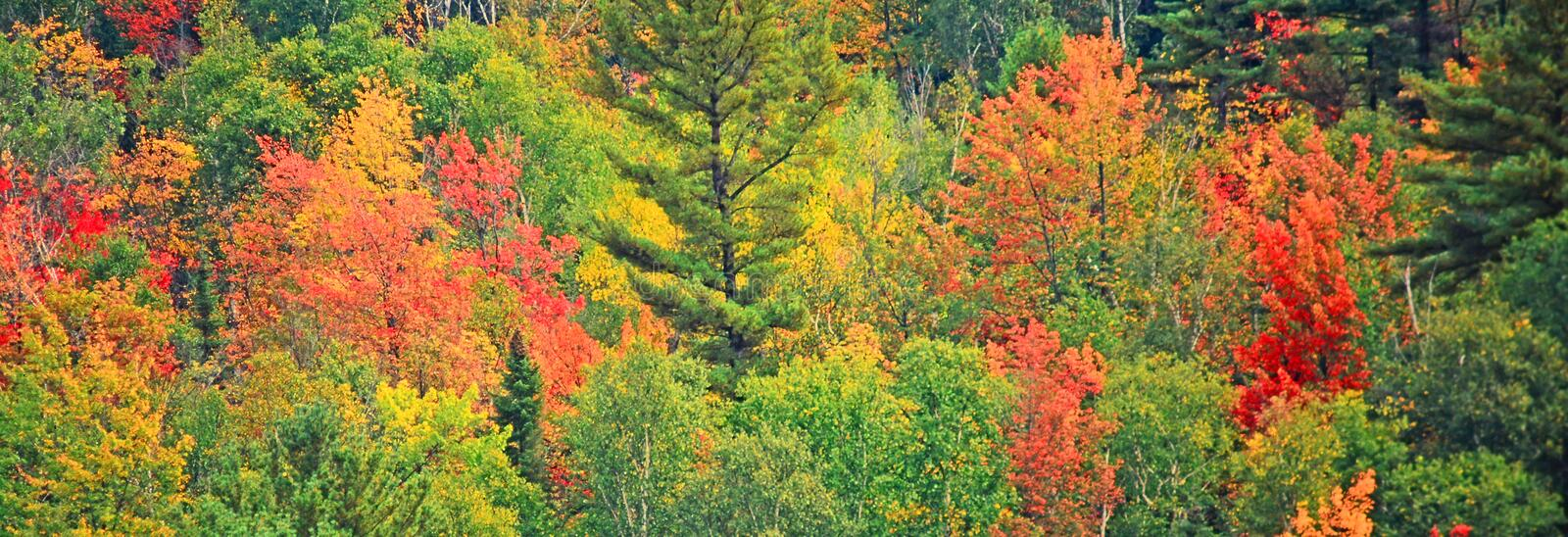 Trees in fall colors stock photo