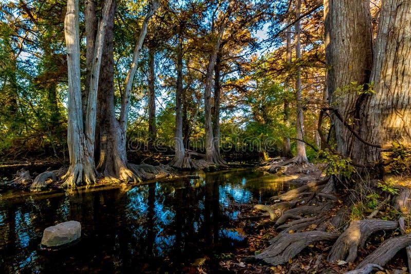 Trees with Fall Foliage on Cibolo Creek, Texas. royalty free stock image
