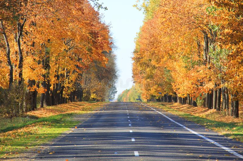 Fall foliage and road four. Trees with fall foliage on country road royalty free stock photos