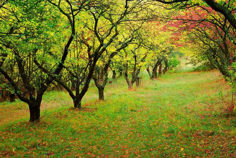Trees In Fall Season Royalty Free Stock Image