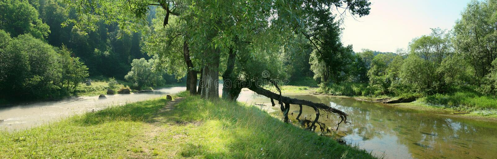 Trees and fallen tree on the bank of shallow river.  stock images