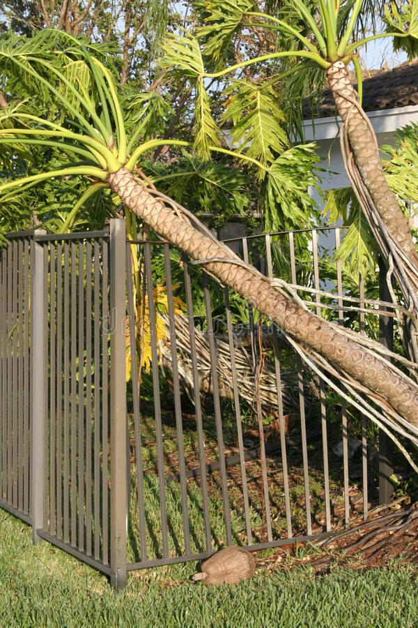 Trees and fence are ripped up from Hurricane winds. stock images