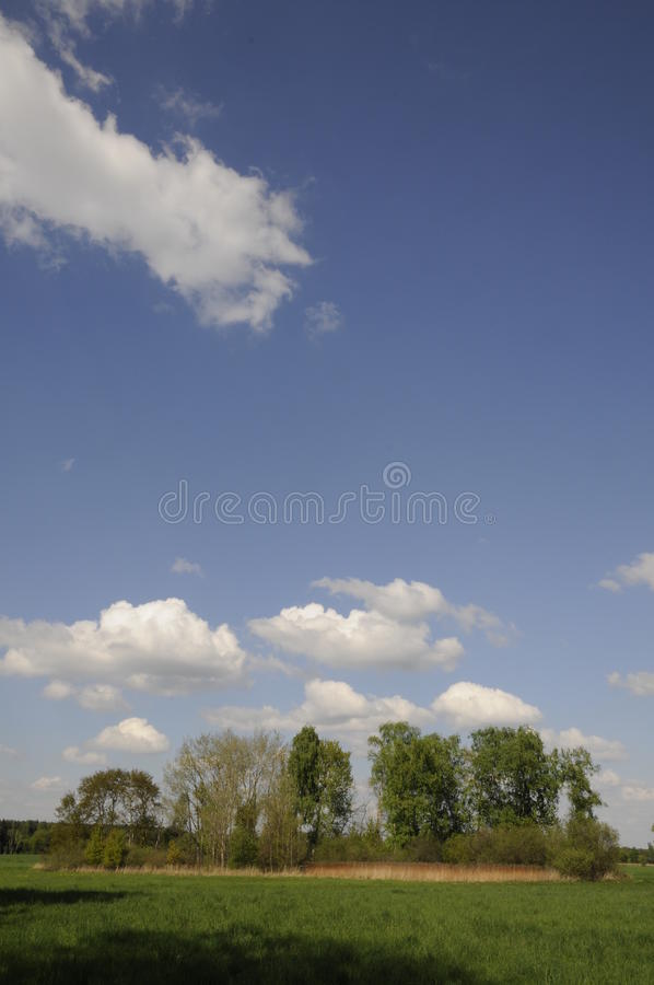 Download Trees At A Field Royalty Free Stock Image - Image: 12791406