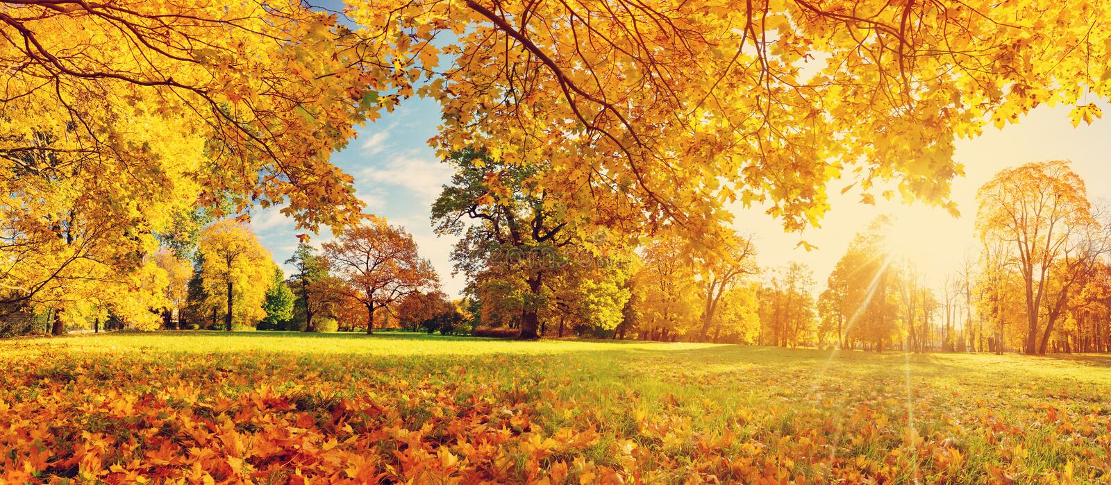 Trees on the field in autumn royalty free stock image