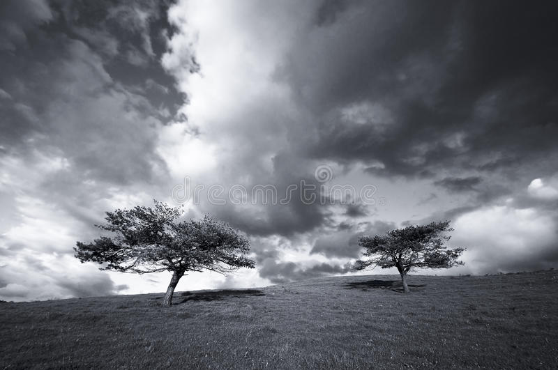 Trees In The Field And The Clouds Stock Image