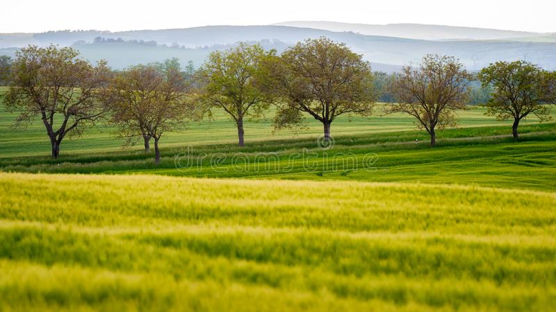 Trees and Field. Green fields and trees in a line with hills in background. Landscape in South Moravia, Czech. Defocused Foreground royalty free stock image