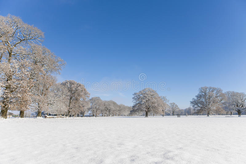 Trees and field in snow covered winter landscape royalty free stock photography