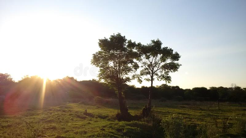 TREES IN THE FIELD IN SOUTH AFRICA. TILL LIFE DO THEM APART, THEY ARE STRONGER TOGETHER, IN SUMMER AND WINTER stock photography