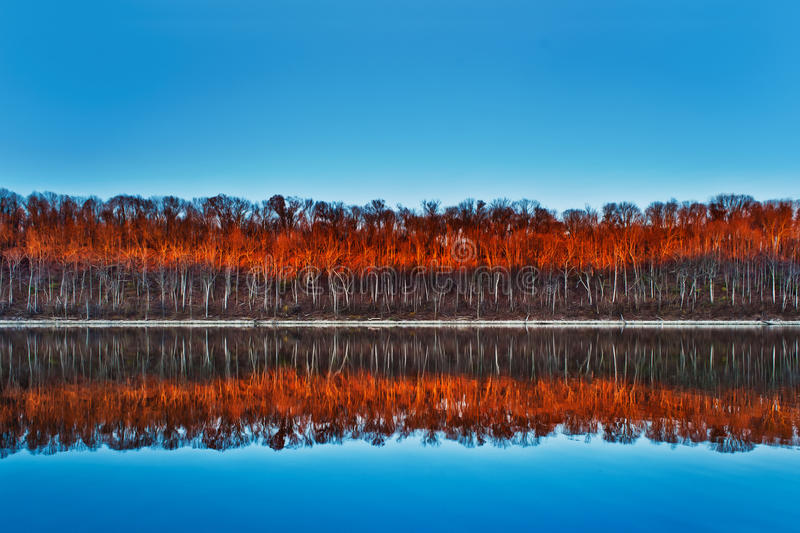 Trees of Fire stock photo