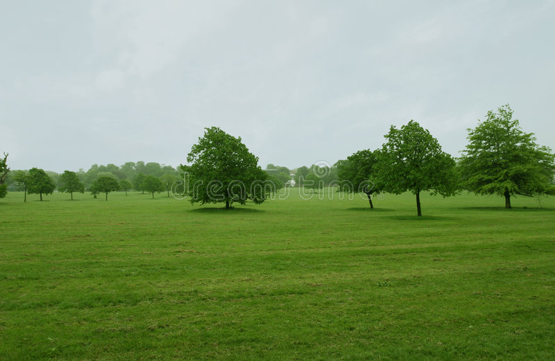Trees on flat grass royalty free stock photography